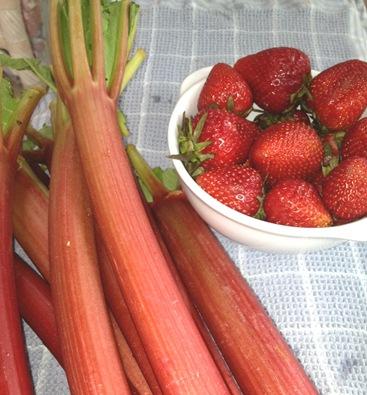 Rhubarb 5-13-13