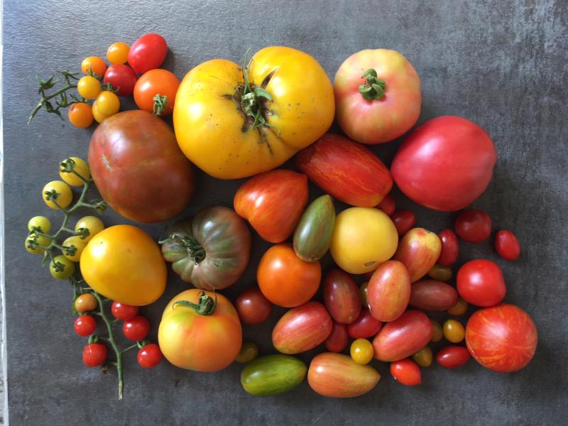 Heirloom tomato array